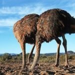 ostriches with heads in the sand 150x150 - It's Getting Harder to Hide